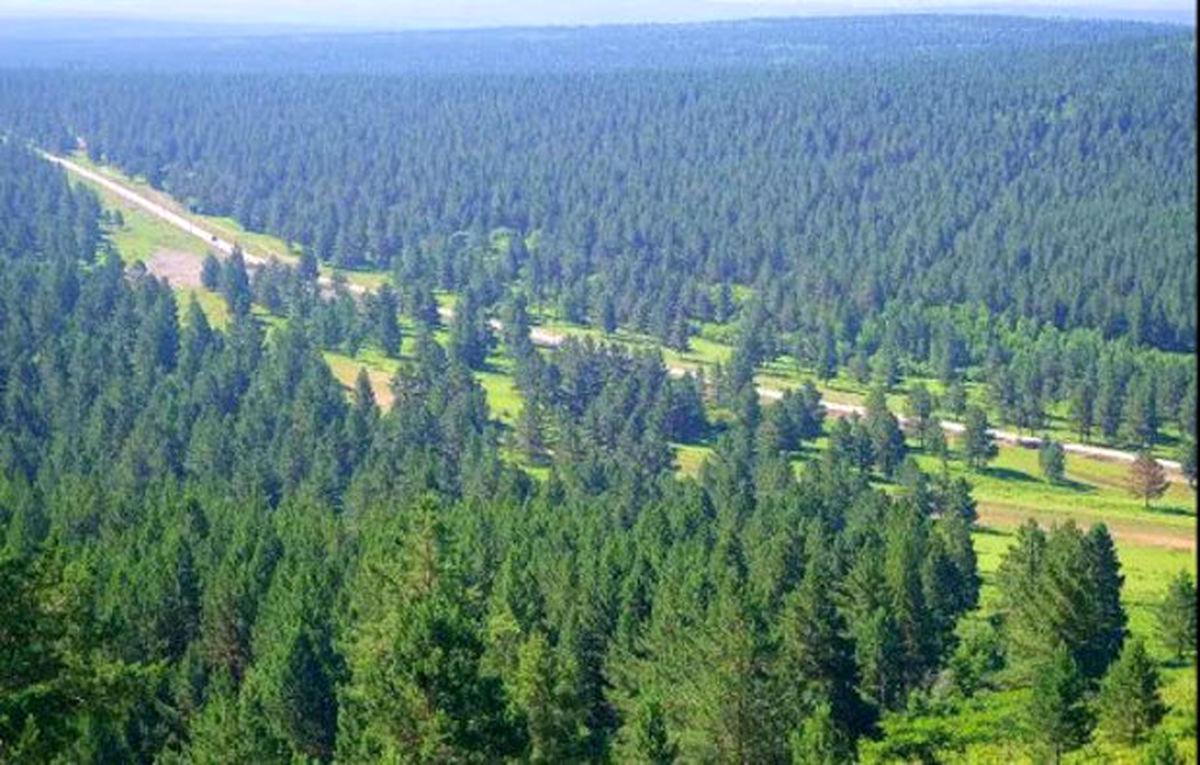هشدار | احتمال آتش سوزی در جنگل های گیلان